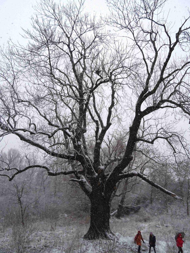Krásný i v zimě